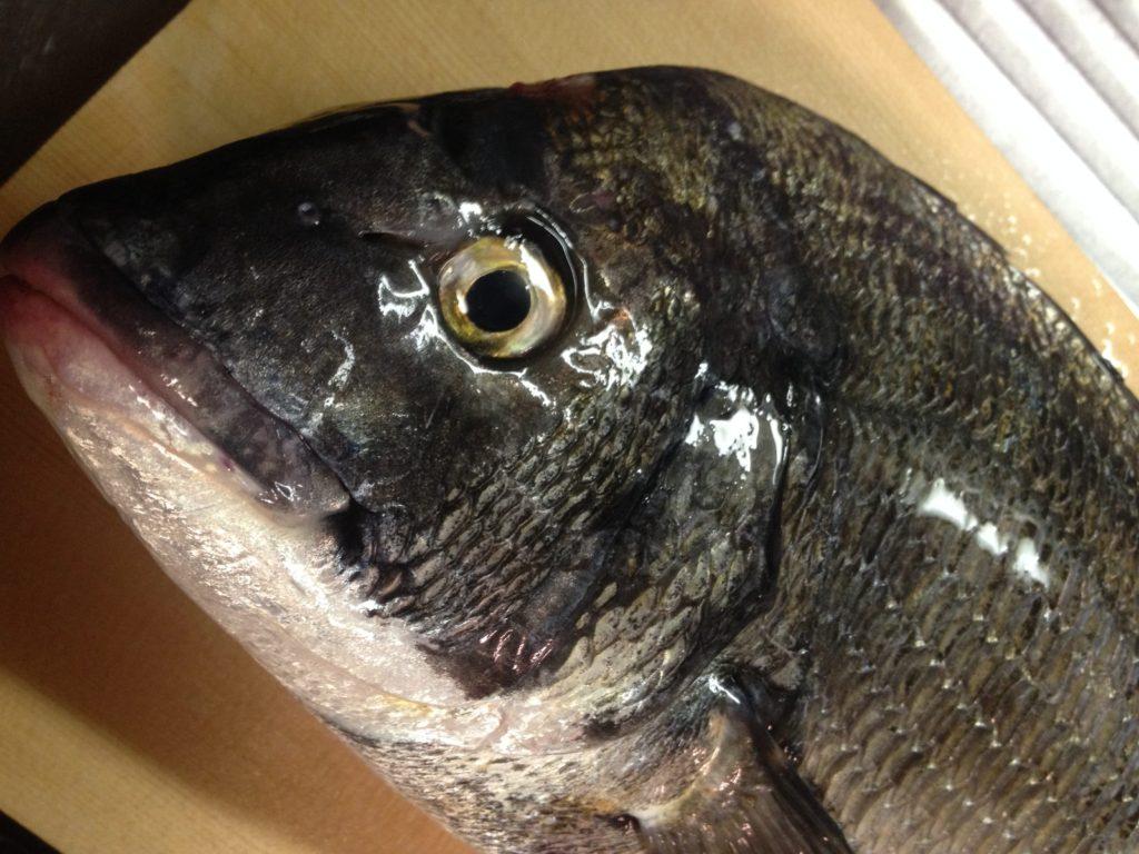 名古屋港の魚って食えるの?【2017年11月版】