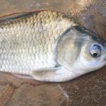 ヘラブナ釣りには釣りの基本と醍醐味が詰まっている