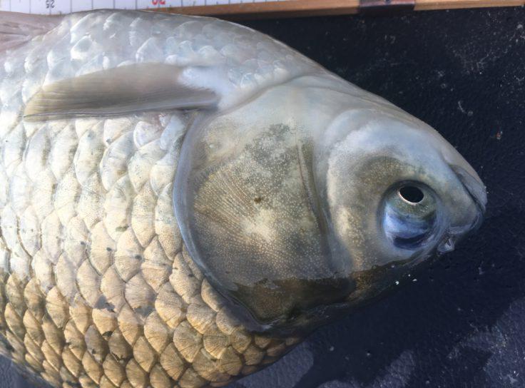 ヘラブナ釣り業界の危惧:人口減少について - 釣考