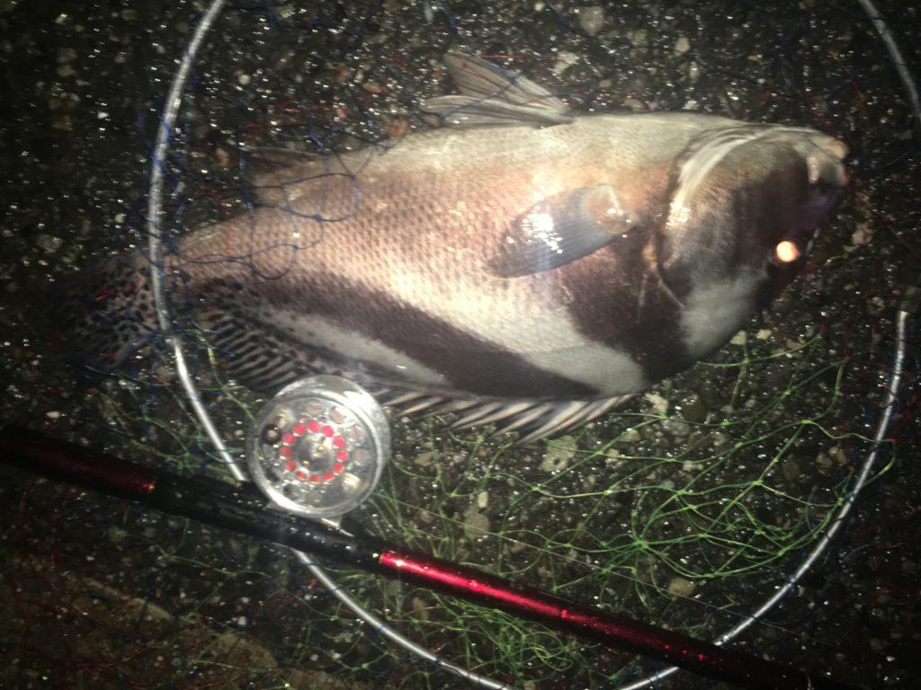 名古屋周辺で釣り餌を買うなら