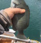 浜名湖ダンゴグレ、強風、混雑、大潮の三重苦