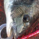名古屋港チヌのウキフカセ釣りサナギ釣法のまとめ【2.ハリその他仕掛け】(2019年版)