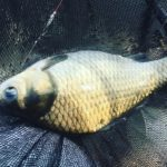 ヘラブナ釣り人口減少を食い止める当事者感覚の重要性2