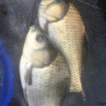 共に学ぶ仲間を見つけると釣りが上達しやすい