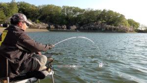 猫ヶ洞池で向かい風の浅ダナセット【へらぶな釣り】